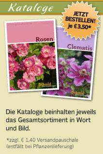 kataloge - www.schmid-gartenpflanzen.de -, Garten Ideen