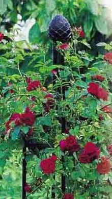 Obelisk für Rosen
