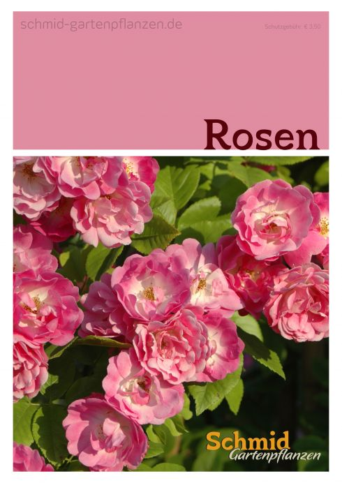 Katalog 39 rosen 39 online kaufen kataloge for Gartenpflanzen versand