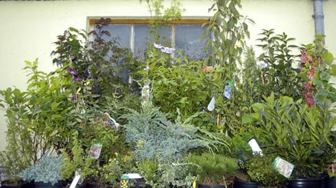 einen garten pflanzen welche pflanzen f r den balkon. Black Bedroom Furniture Sets. Home Design Ideas